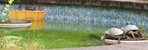 鐳力阿風景 - 烏龜